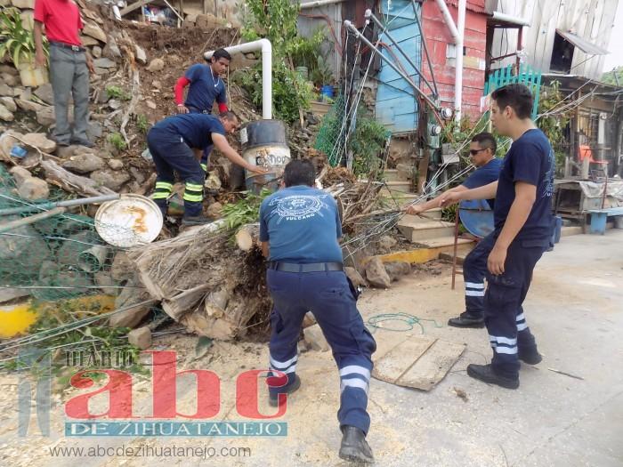Tormenta y fuertes vientos derriban cuatro árboles