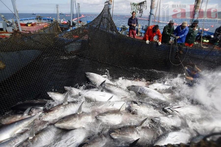 Resultado de imagen para fotos pesca de atun en costas de zihuatanejo