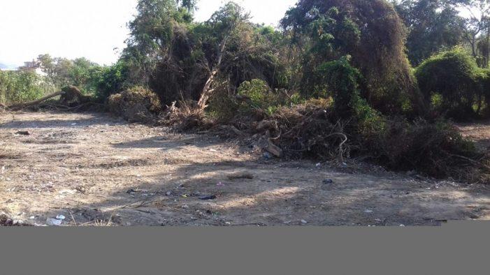 Citaran al responsable de la tala de árboles en la coalición de ejido