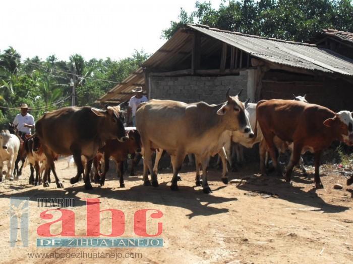 Photo of Sin comercializar la leche de vaca