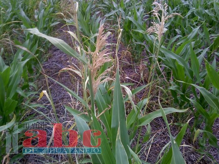 Photo of Continua afectación para productores agrícolas