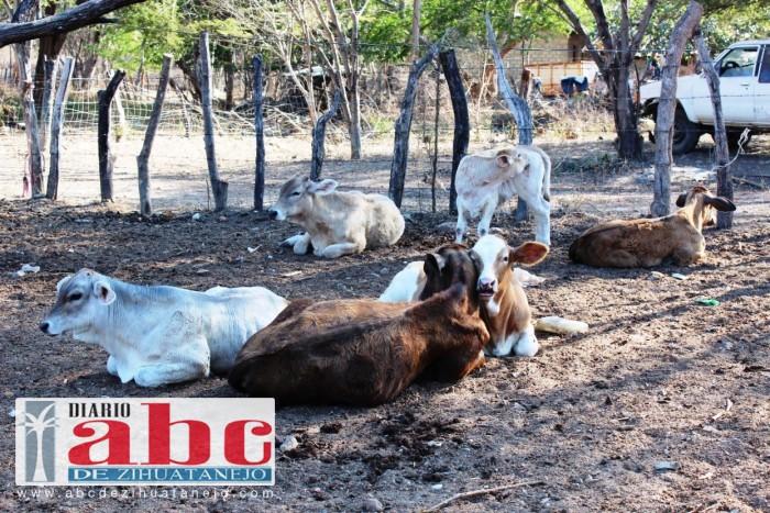 Photo of Ganaderos de Zihuatanejo piden que se retome el proyecto de la presa para aumentar producción