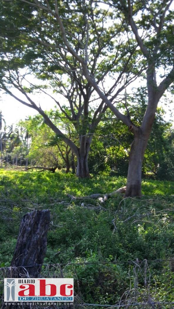 Photo of Persiste la tala de árboles protegidos