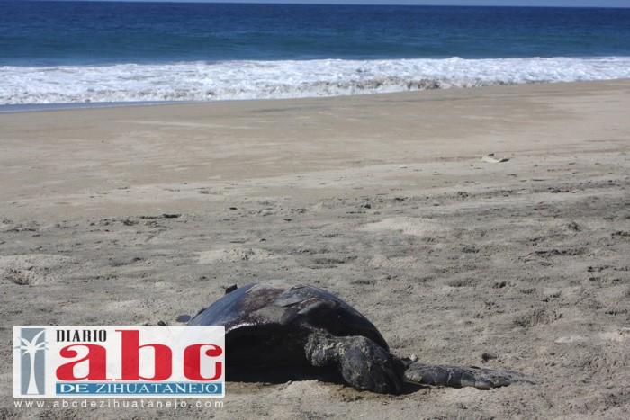 Photo of Aparecen decenas de tortugas muertas en la orilla de la playa