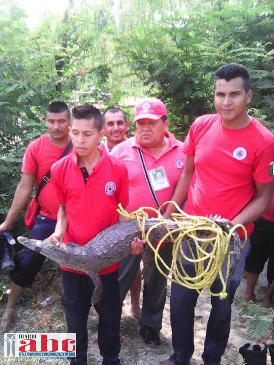 Photo of PCM,  capturan a saurio en el río de Atoyac