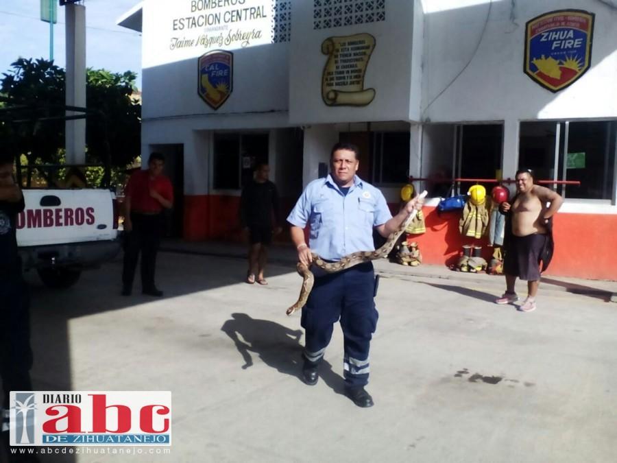 Photo of Capturan boa cerca de la base de las combis