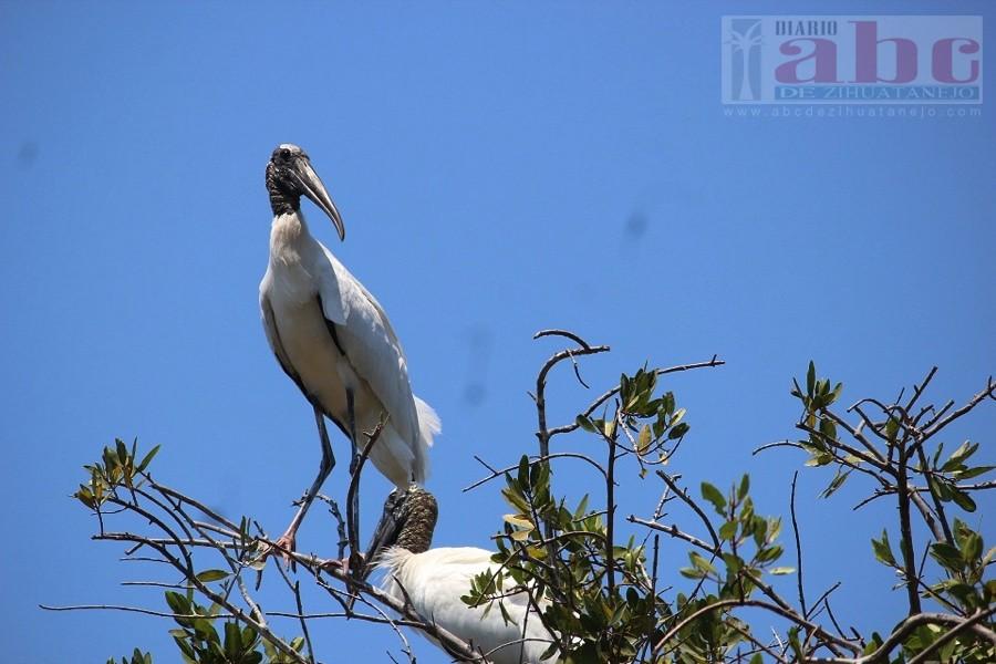 Photo of Aves migratorias en playa Linda un gran atractivo turístico
