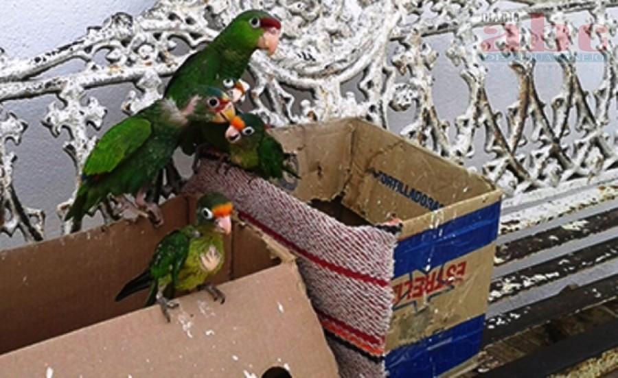 Photo of Detienen a sujeto que vendía aves exóticas en peligro de extinción