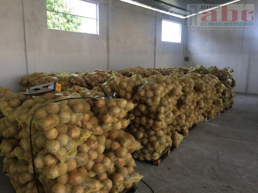 Photo of Exportan  coco en fruta a los Estados Unidos