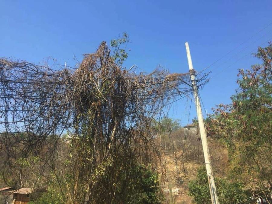 Photo of Piden habitantes a la CFE retire la maleza de los cables