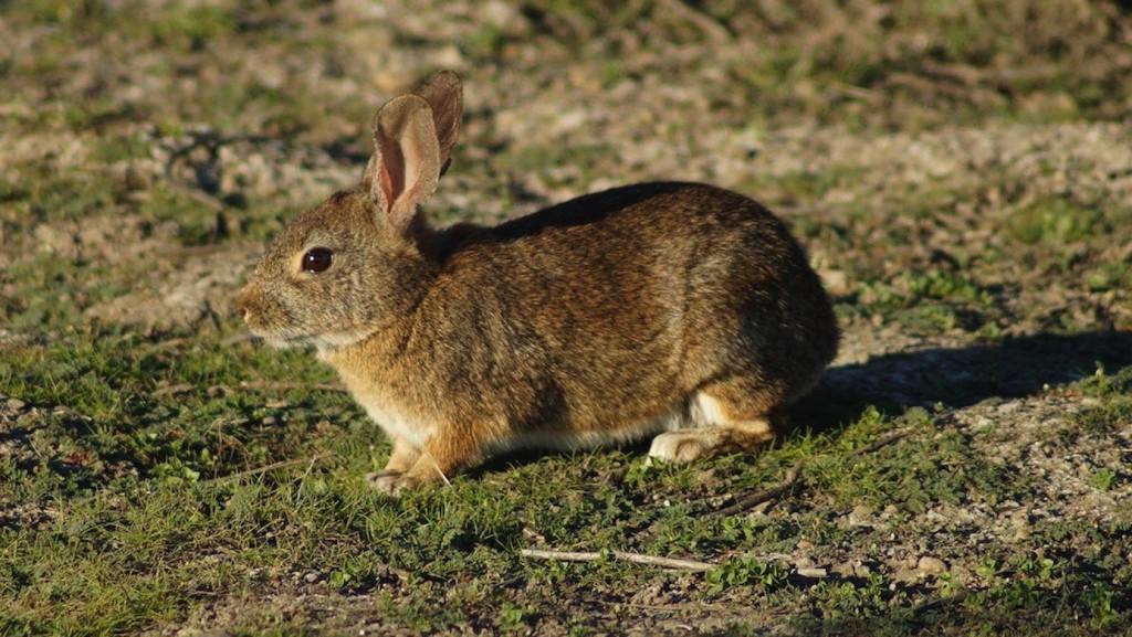conejos-isla-de-ixtapa-.jpg
