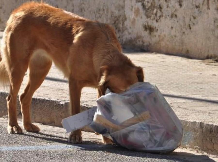 carcel-descuido-perros--zihuatanejo.jpg