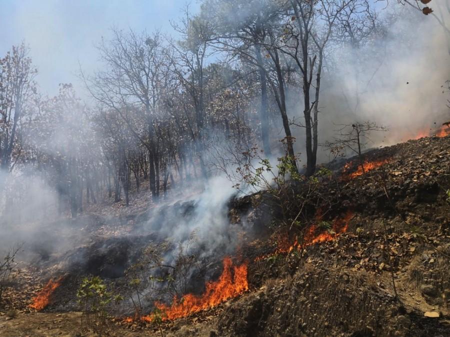Photo of Mayoría de Incendios forestales son provocados: Jorge Cervantes