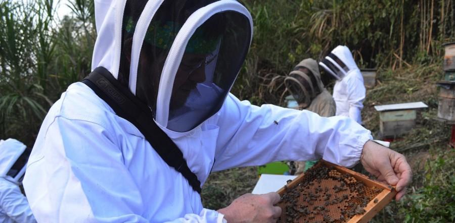 reactivar-apicultura--zihuatanejo.jpg