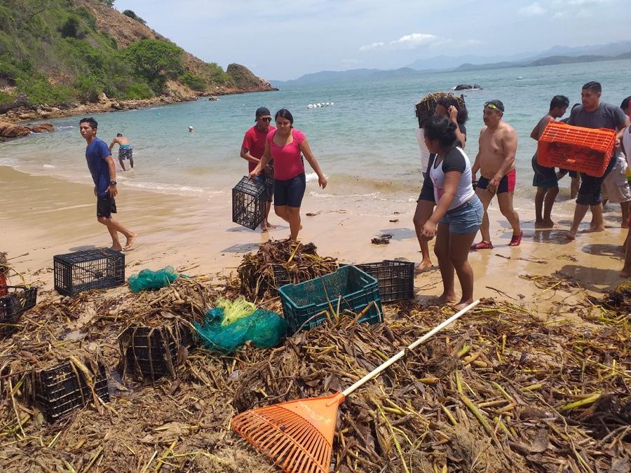 Photo of Turistas se suman a retiro de 124 toneladas de lirio en playa Varadero