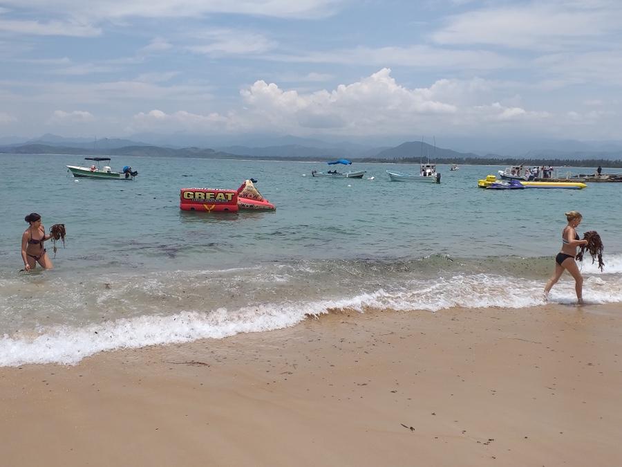 Photo of Ya no hay presencia de lirio en playas de la Isla